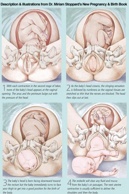 Your-Baby's-Birth---Dr.-Miriam-Stoppard's-New-Pregnancy-and-Birth-Book